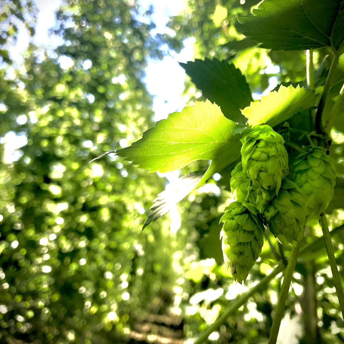 ニセコビール醸造所