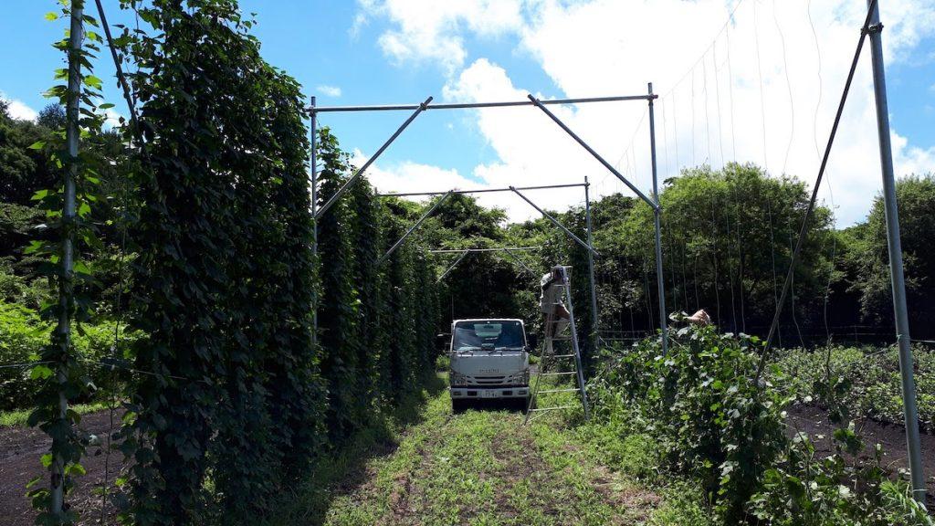 ヤッホー圃場収穫